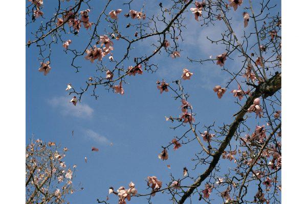 Blossoms 2.jpg
