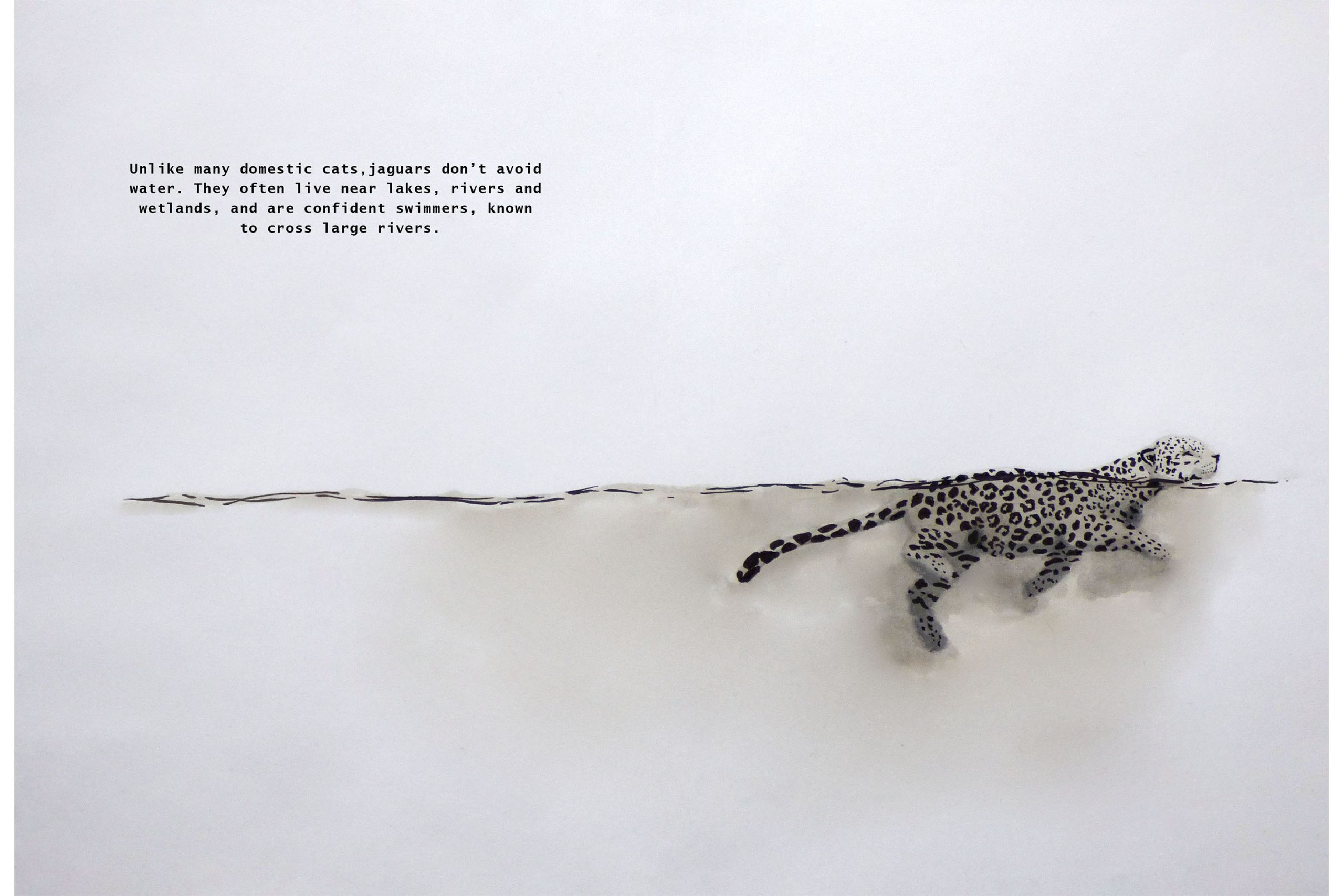 Jaguar Swimming.jpg