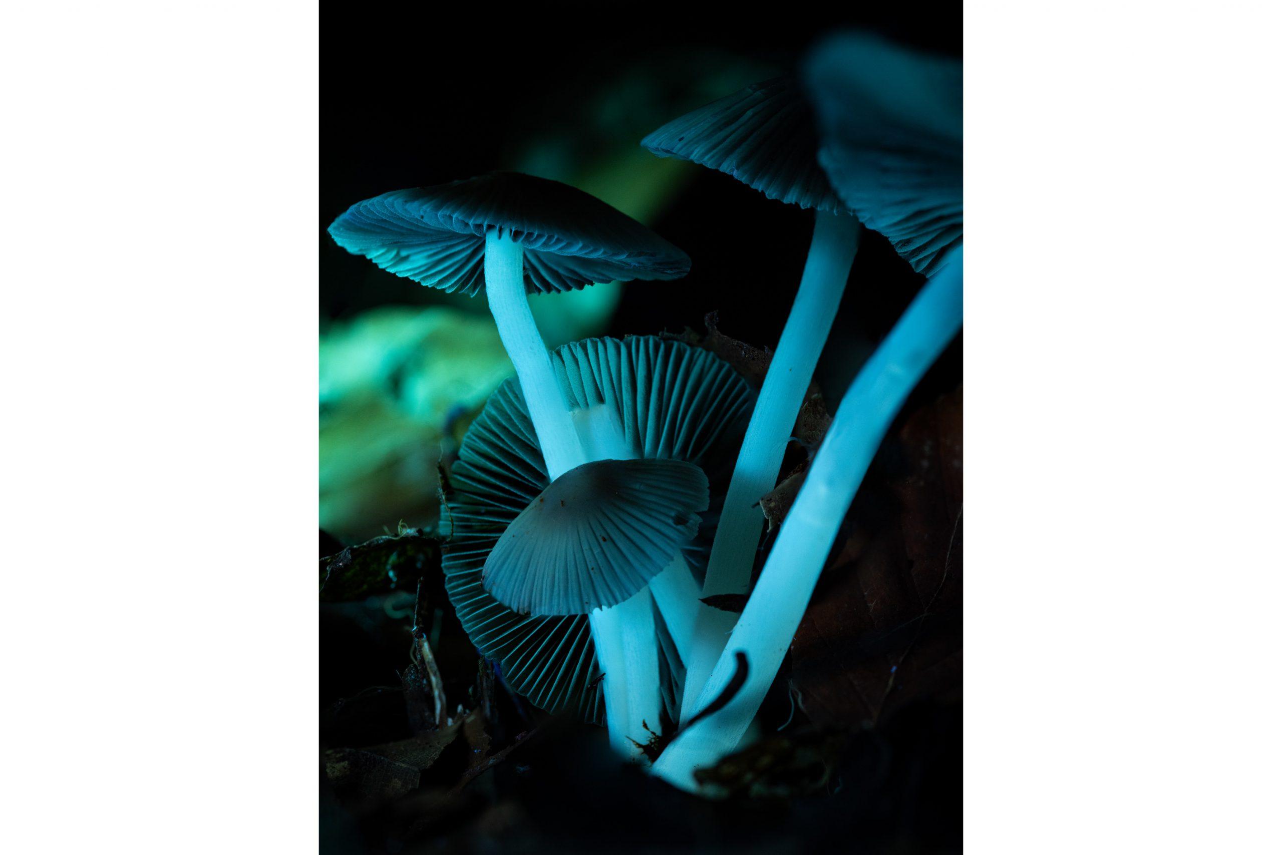 JamesWylie Grisette Mushrooms MNHP.jpg