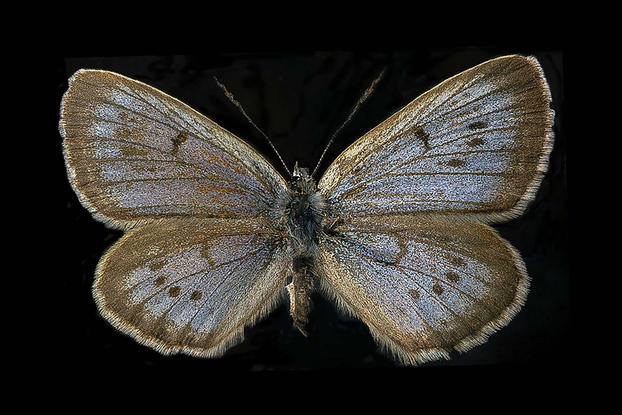 Large Blue Submission 1.jpg