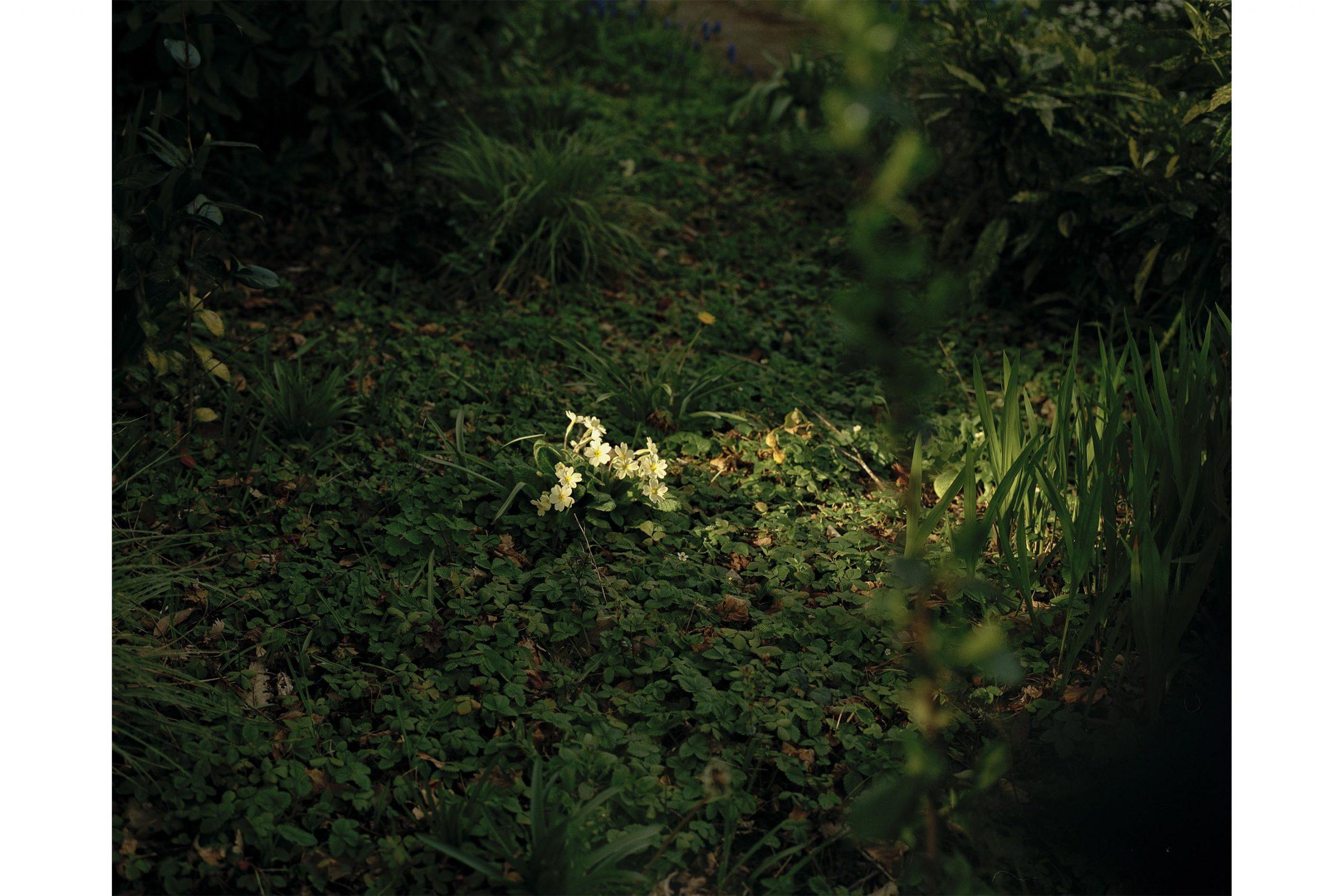 Spring Flower 2.jpg