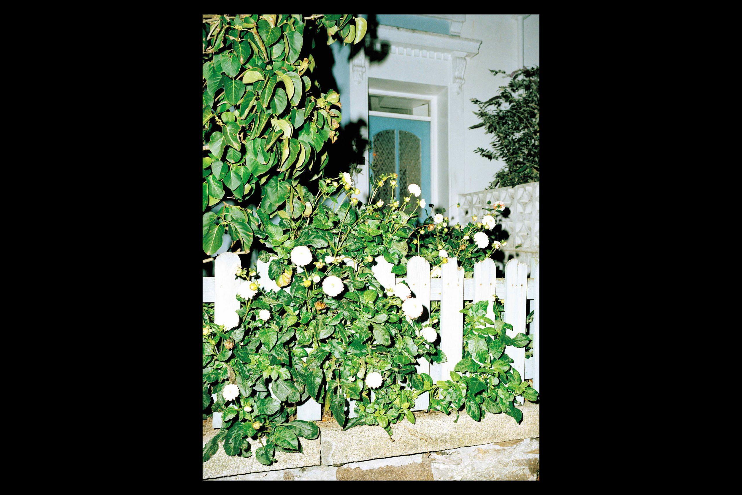 The House Next Door.jpg