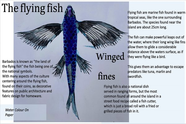 Flying Fish Page 1 Of 4.jpg