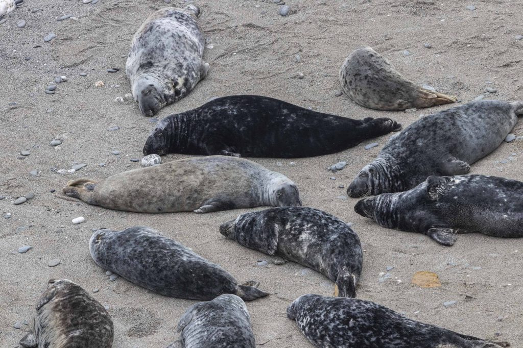 Undisturbed Seals (002)